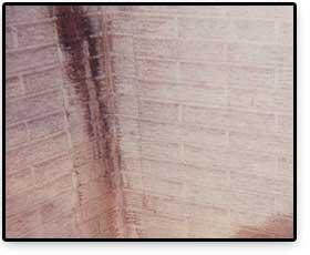 damp-walls-lg