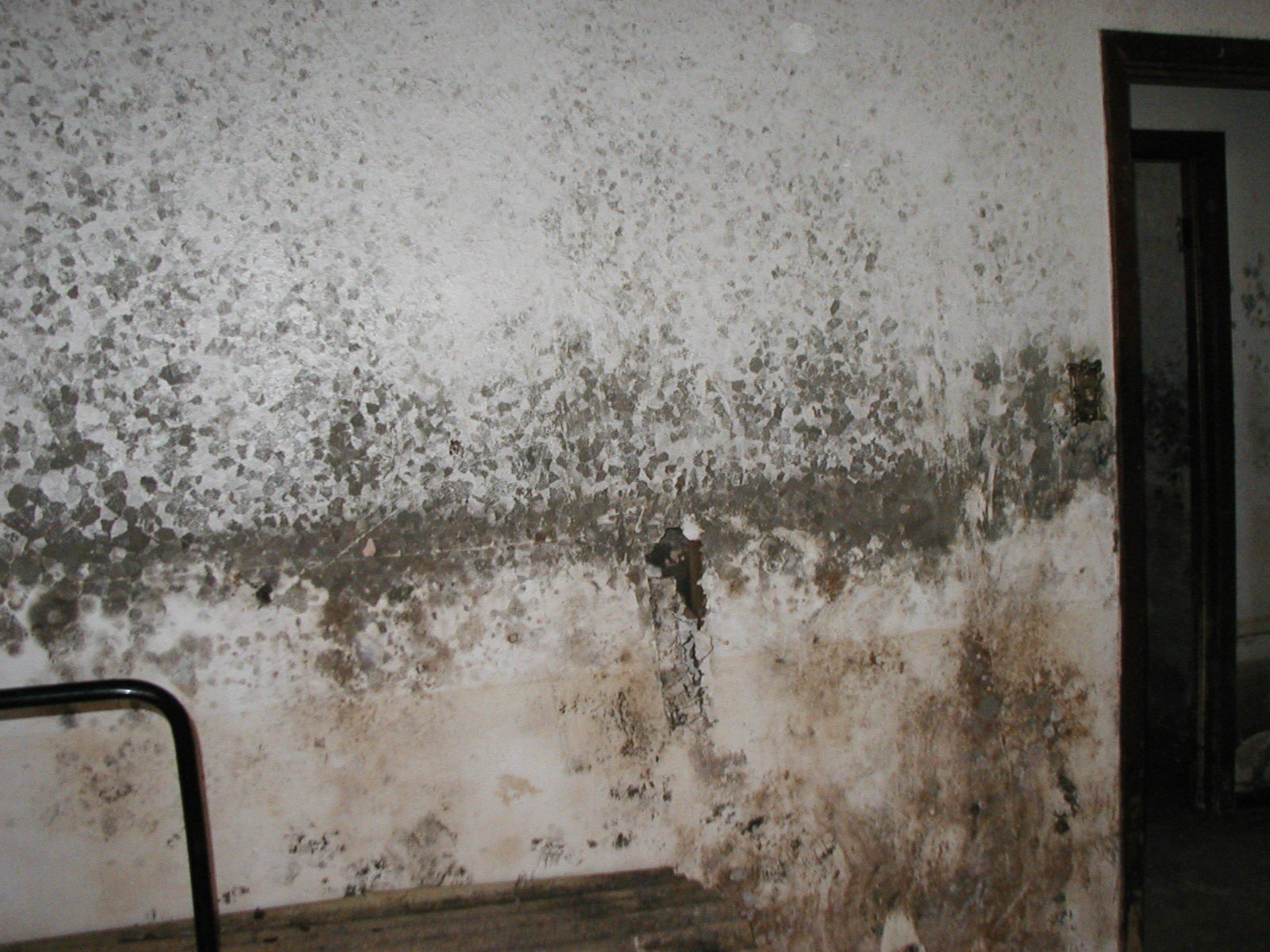 the health dangers of a moldy basement in macedonia oh 44056