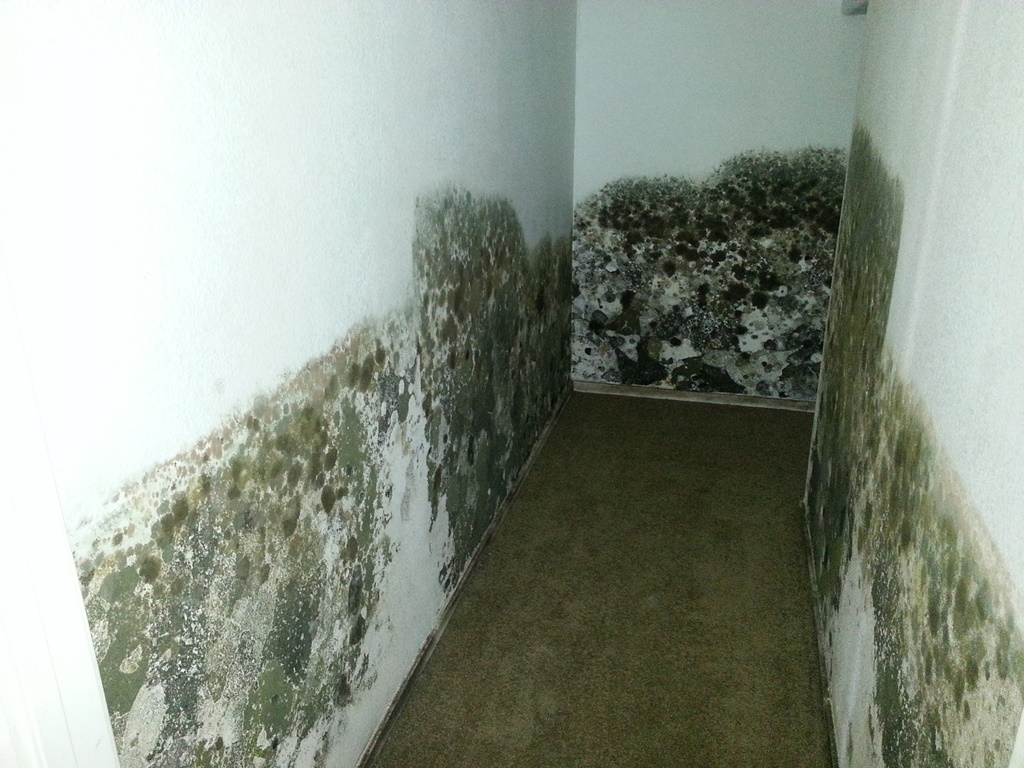 Preventing And Treating Mold In Your Home Lorain Oh